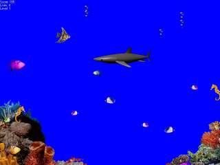 Shadow-Shark!