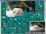 Jigsaw Solver 13