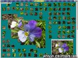 Jigsaw Solver 15