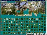 Jigsaw Solver 17