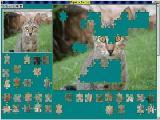 Jigsaw Solver 32